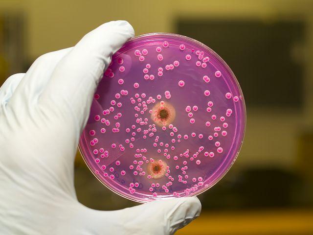 Чем вылечить молочницу после приема антибиотиков