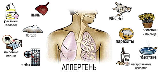 аллергия – индивидуальная болезнь