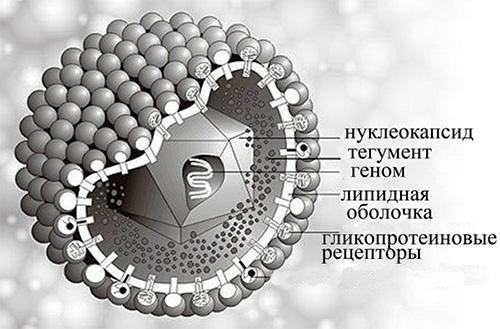 зашифрованный вирус простого герпеса