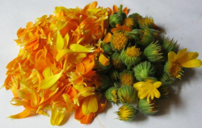 соцветия календулы