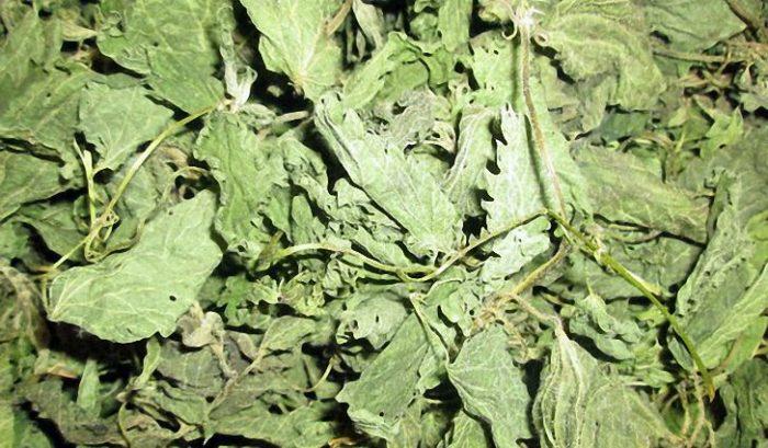 сухие листья крапивы
