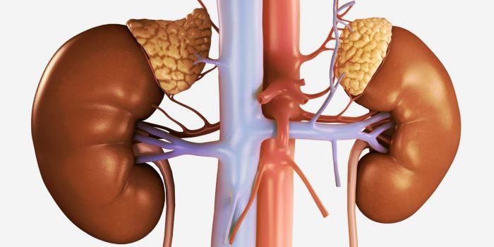 природные кортикостероиды