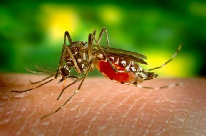 лечение укусов насекомых